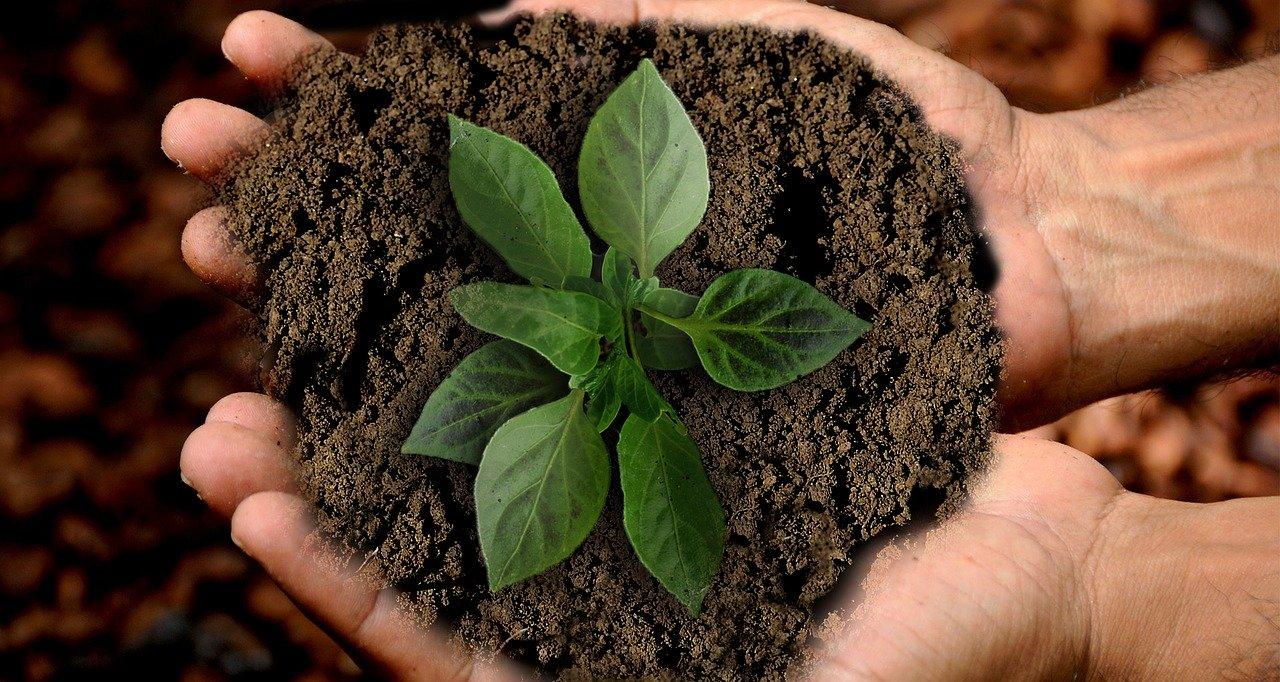 Elemento terra nella riflessologia plantare