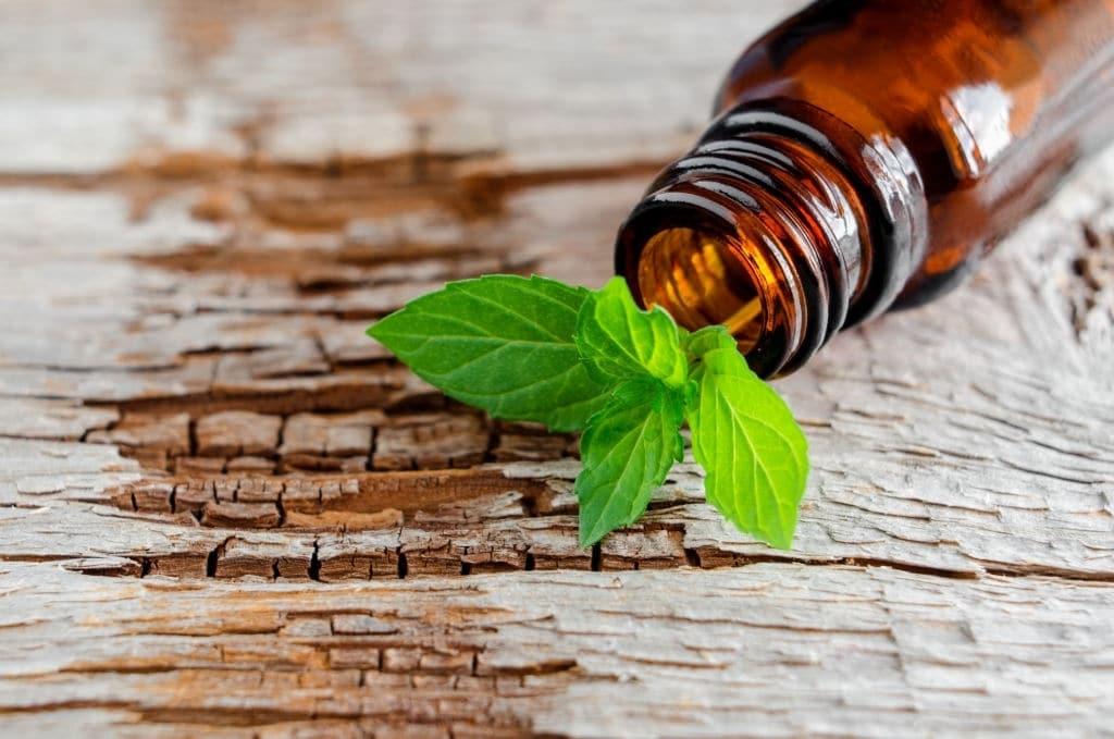 Olio rinfrescante utilizzato per il massaggio ayurvedico pittabyangam